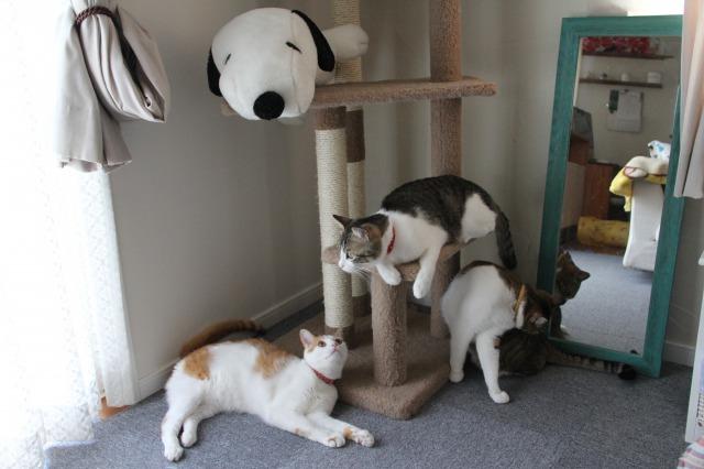 3匹の猫2