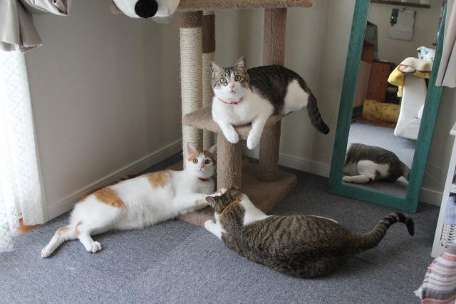 3匹の猫3