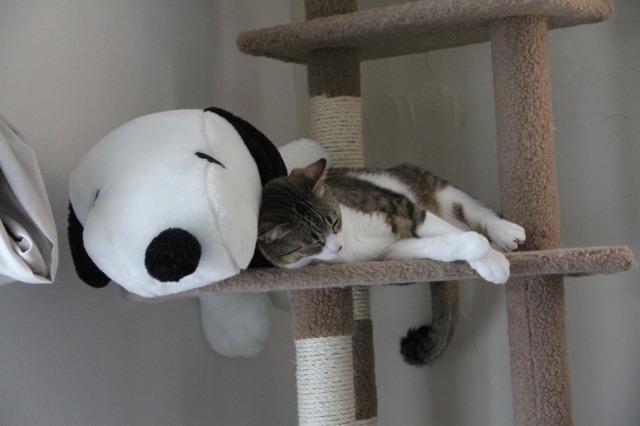 スヌーピーと猫1