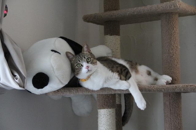 スヌーピーと猫2