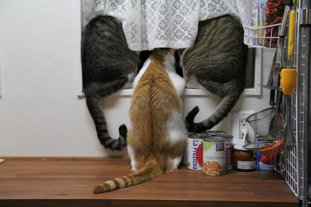 3匹の猫後ろ姿