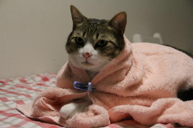 猫ポンチョ