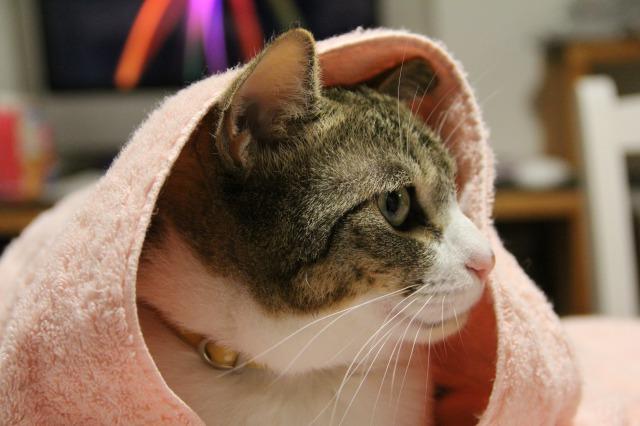猫マスター