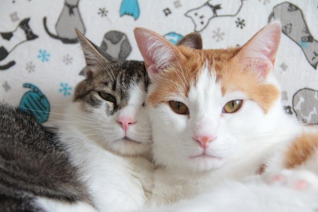 ソファー猫1