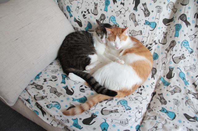 ソファー猫2