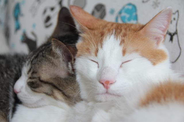 ソファー猫3