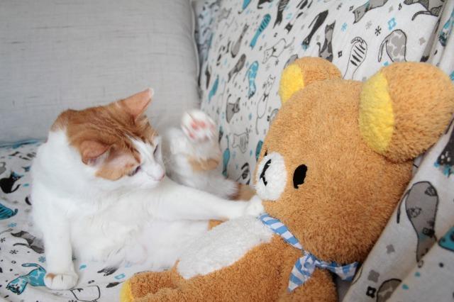 リラックマと猫1