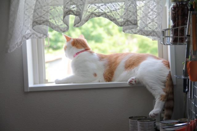 小窓際猫1