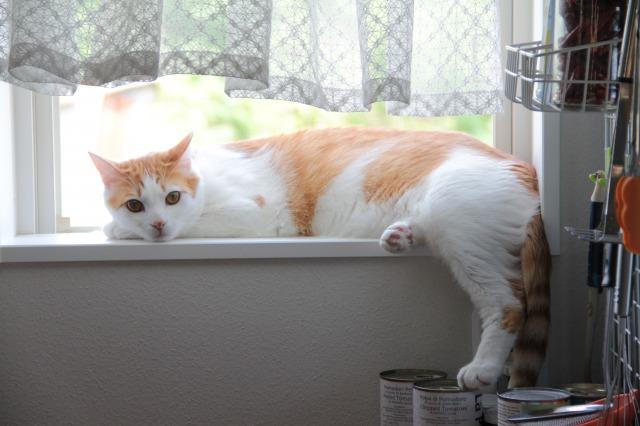 小窓際猫3