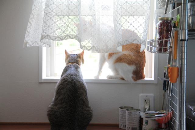 小窓際猫4