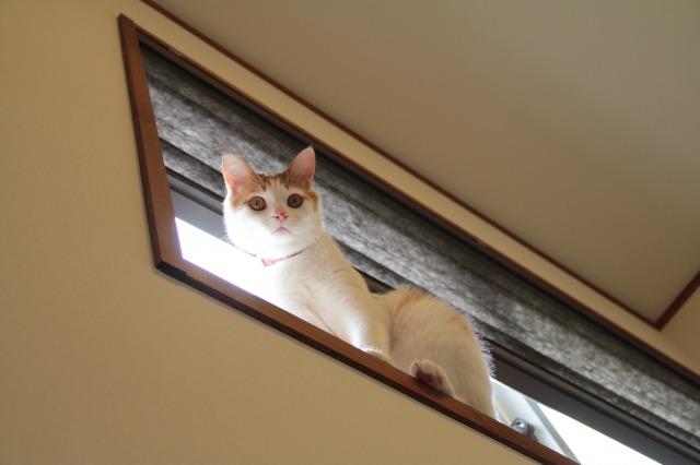 飛び乗り猫2