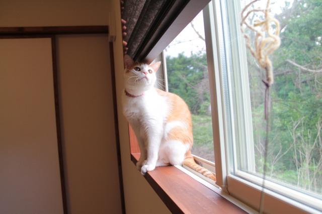 飛び乗り猫3