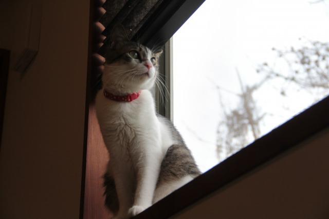 窓際どんちゃん2