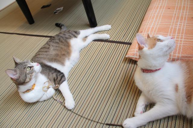 猫じゃらし取り合いっ子3
