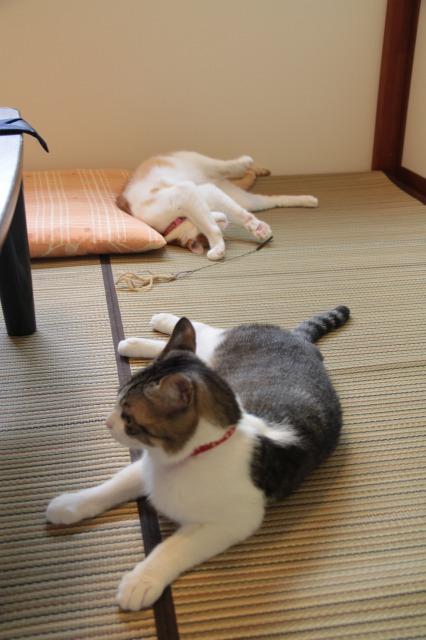 和室ゴロゴロ猫1