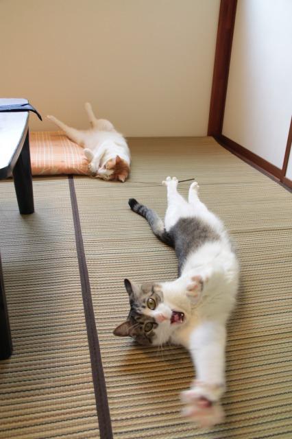 和室ゴロゴロ猫2
