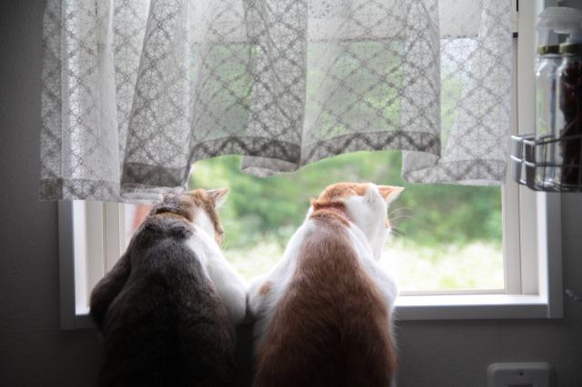 のれん猫1