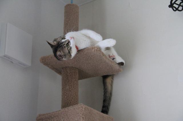 キャットタワー猫ズ1