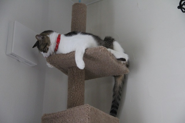 キャットタワー猫ズ2