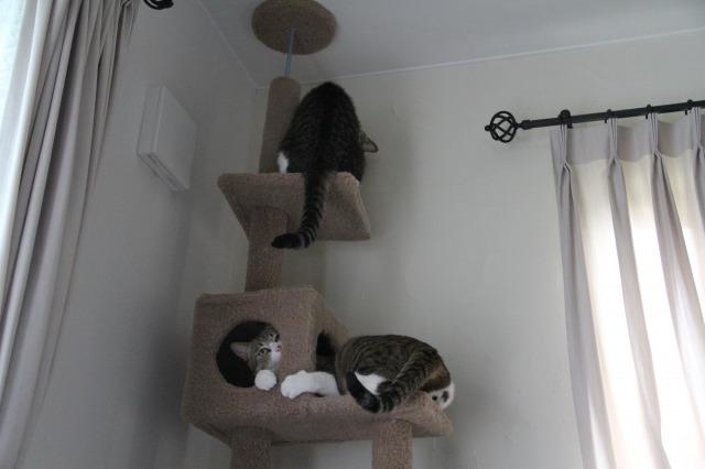 キャットタワー猫ズ5