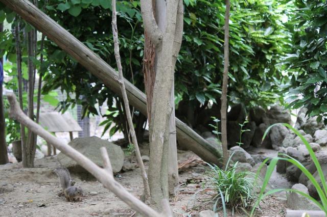 城山動物園:リスの森