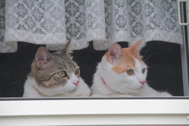 出迎え猫1