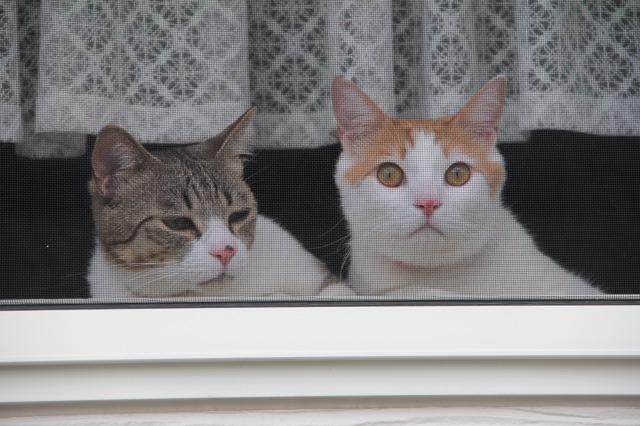 出迎え猫2