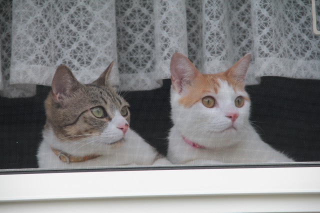 出迎え猫3