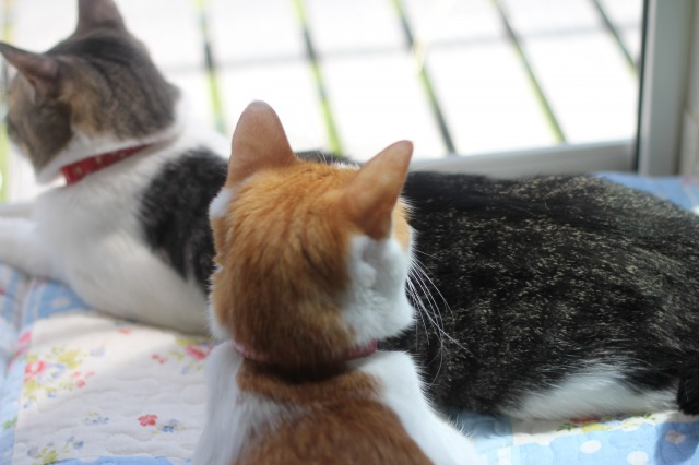 のんびり猫2