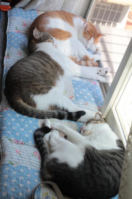 夏の窓辺猫1