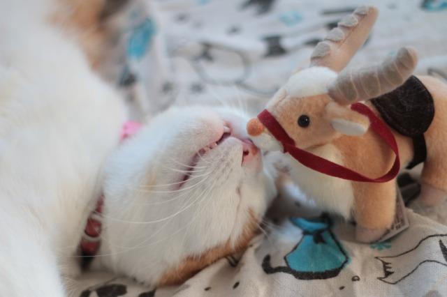 ヤックルと猫1