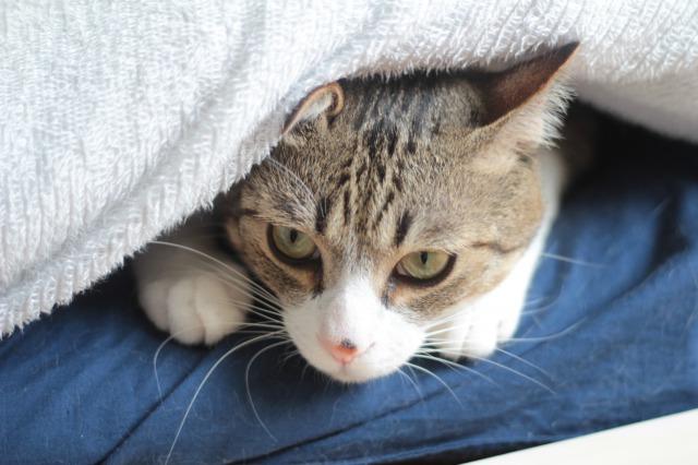 挟まる猫2