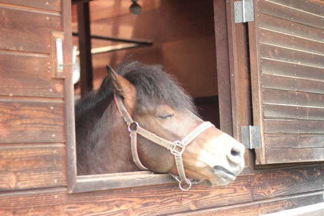 木曽馬の里2