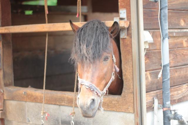 木曽馬の里3