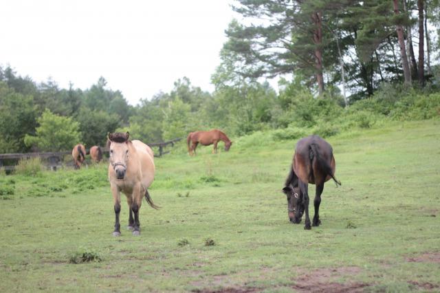 木曽馬の里4