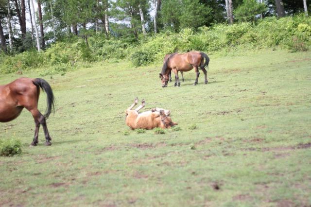 木曽馬の里6