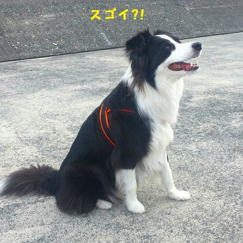 s-_20160410_163447.jpg