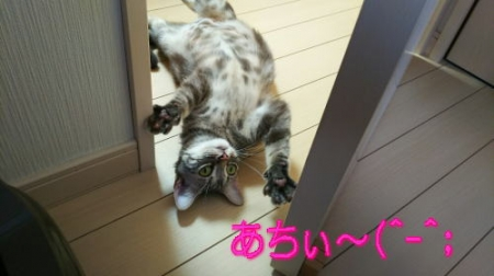 image1saku1.jpg