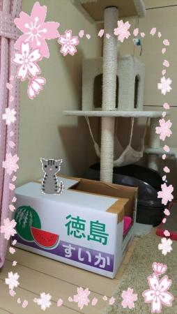 image1sakura2.jpg
