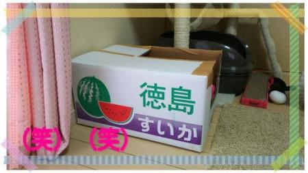 image2sakura1.jpg