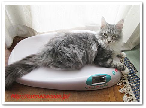 家庭用ペット体重計は目安