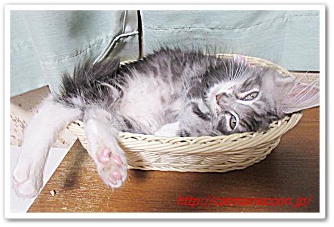 猫ペットはパン籠に決定