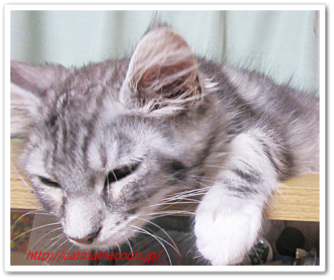 The Japan Tims ・編 『猫の単語 neko tan』 を読みました