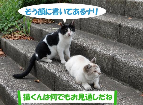 そう顔に書いてあるナリ 「猫くんは何でもお見通しだね」