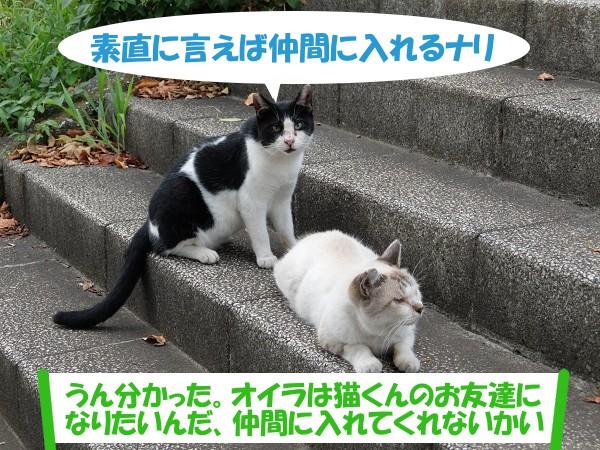 素直に言えば仲間に入れるナリ 「うん分かった。オイラは猫くんのお友達になりたいんだ、仲間に入れてくれないかい」