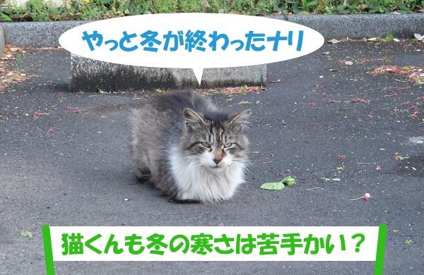 やっと冬が終わったナリ 「猫くんも冬の寒さは苦手かい?」