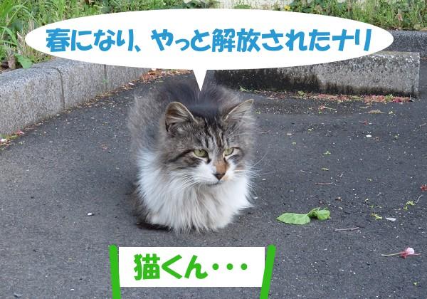 春になり、やっと解放されたナリ 「猫くん・・・」