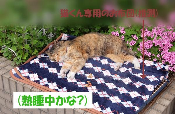 「熟睡中かな?」 猫くん専用のお布団(推測)