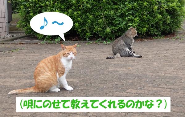 ♪~ (唄にのせて教えてくれるのかな?)