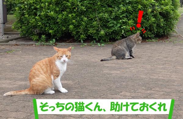 「そっちの猫くん、助けておくれ」